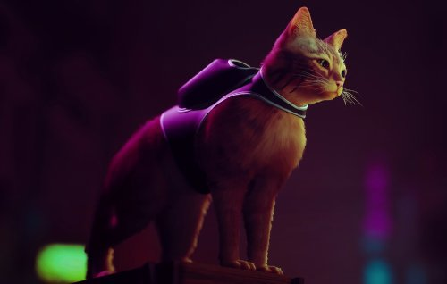 Cat adventure game 'Stray' delayed to 2022 but gets new meaty trailer