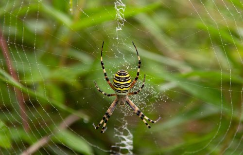 Here's what happened when scientists translated a spider web into music
