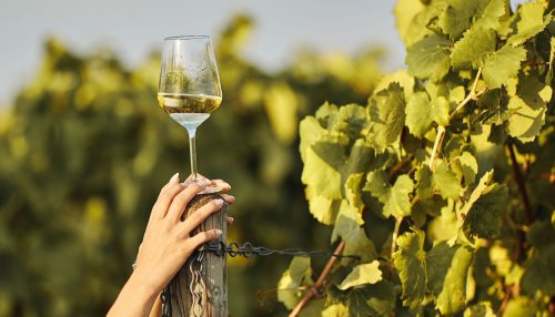 Leichter Sommerwein: Welcher ist der beste?