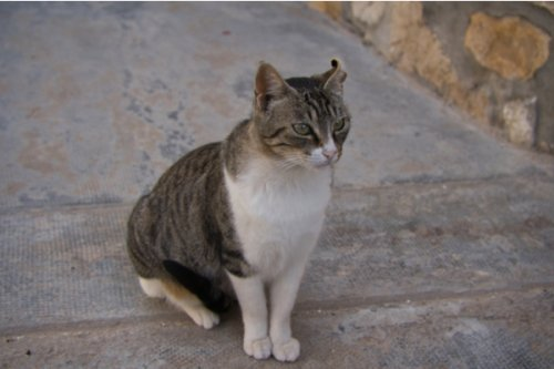 Public Warned About Scam Involving People Taking Stray Cats