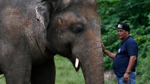 'He Will Be A Happier Elephant': Vet Describes What It Was Like To Rescue Kaavan