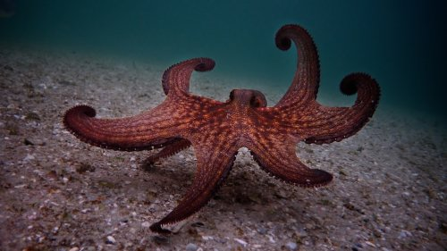 Filmmaker Finds An Unlikely Underwater Friend In 'My Octopus Teacher'