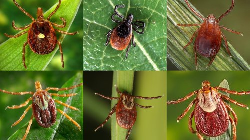 Ticks Suck. Here's A Guide To Identifying Them And Avoiding Bites