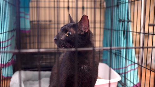 Binx The Cat, A Survivor Of The Florida Condo Collapse, Was Reunited With His Family