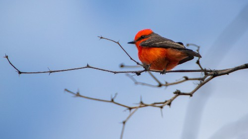 Learning To Love Bird Photography, Thanks To A 'Competitive Collaboration'