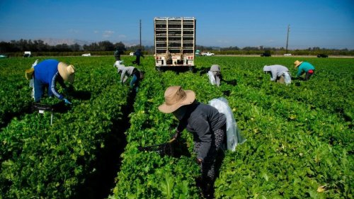 In A Narrow Ruling, Supreme Court Hands Farmworkers Union A Loss