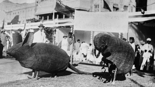 How Bubonic Plague Reshaped The Streets Of Mumbai