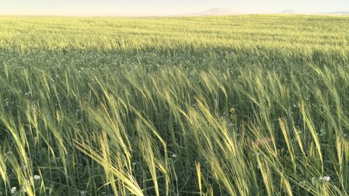 Diversifying Crops Is Good For The Planet. But Can It Be Good For Farmers' Wallets?