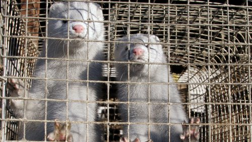 Israel Has Become The 1st Country To Ban The Sale Of Most Fur Clothing