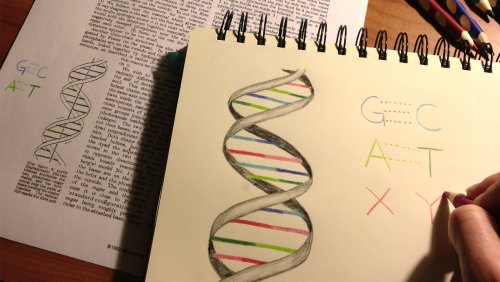Chemists Expand Nature's Genetic Alphabet