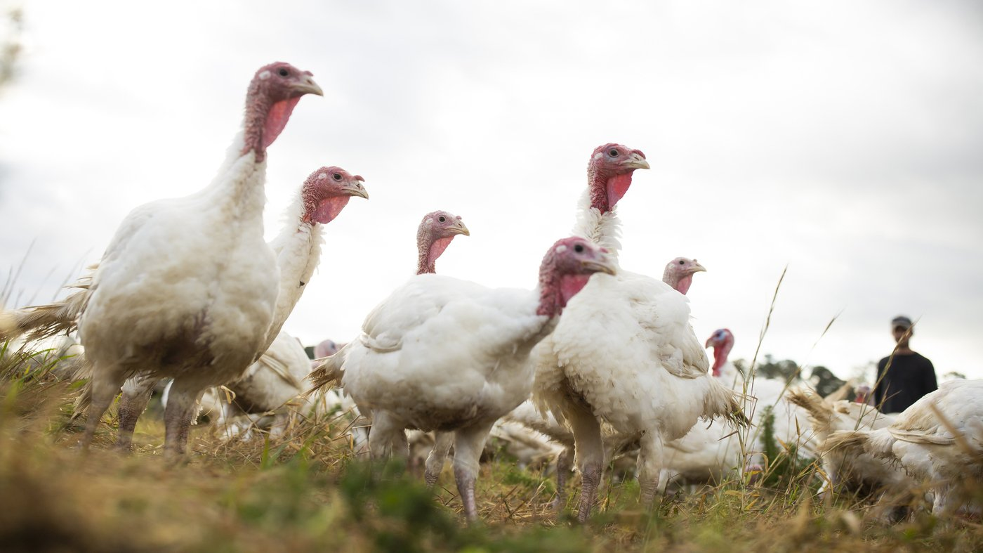 Small Turkeys Are In Demand As Americans Downsize At Thanksgiving