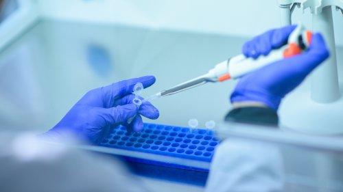 Immune Response In Animals Good News For COVID-19 Vaccine Development