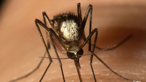 Scientists Find New Invasive Mosquito Species In Florida