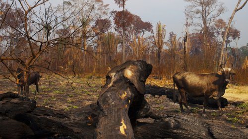In Brazil, Deforestation Is Up, And So Is The Risk Of Tree Extinction