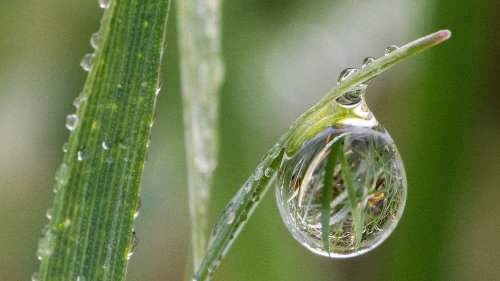 The Science Behind That Fresh Rain Scent