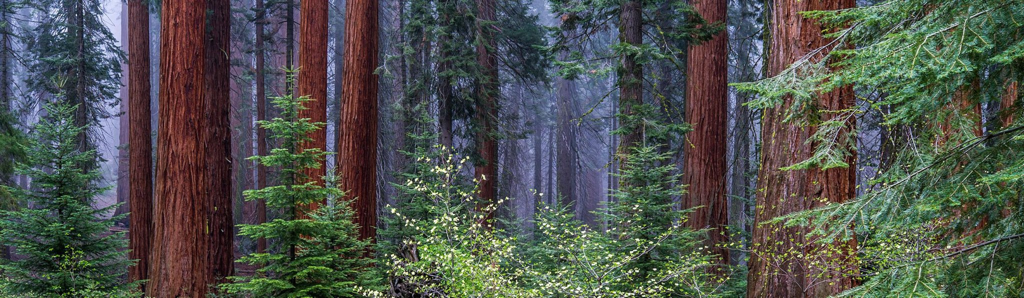 Sequoia Kings Canyon National Parks (U.S. National Park Service)