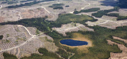 Paper Excellence Expansion Shows Threats to Canada's Forests