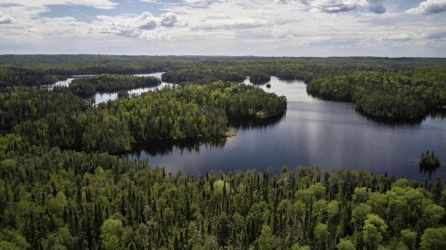 Opposition to Forest Bills Risks Canada's Global Reputation