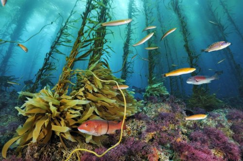 A Safety Net for Ocean Fisheries: The Case for Stronger Protection of Essential Fish Habitat Under the Magnuson-Stevens Act