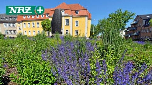 Rees gestaltet Flächen mehr und mehr insektenfreundlich