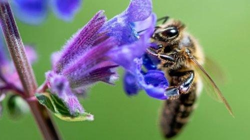Oberhausen winkt mit guten Geldpreisen für Insekten-Gärten