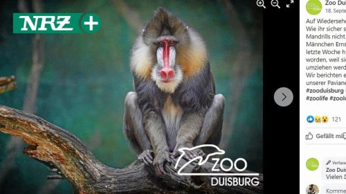 Zoo Duisburg: So geht es den jahrelang versteckten Affen