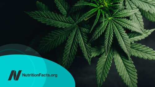Cannabis for Inflammatory Bowel Disease (IBD)   NutritionFacts.org
