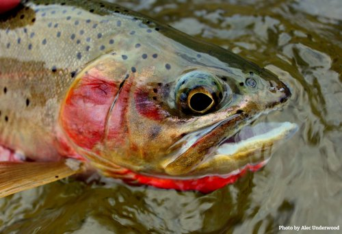 Catch or Release cover image