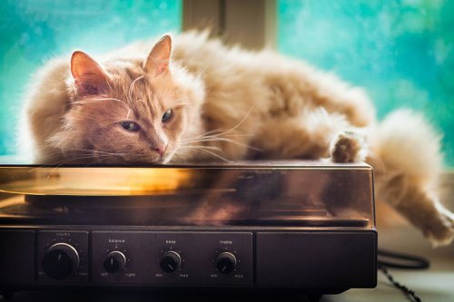 Police called to noise complaint find cat home alone blasting music