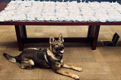 California Highway Patrol dog helps uncover 81 pounds of meth, 11 pounds of fentanyl