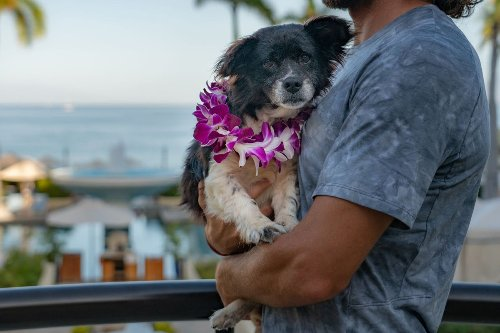 Hawaiian resorts are hosting shelter dogs that guests can win a stay with