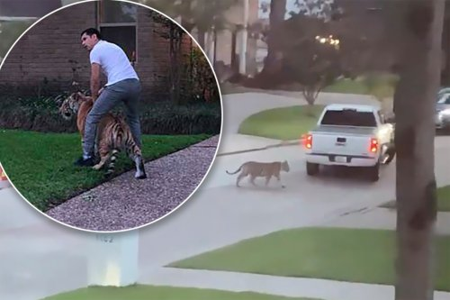 Man spotted with tiger in Houston is out on bond for murder, cops say