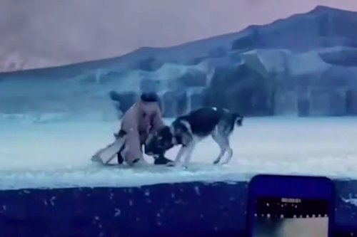 Chinese play criticized for literally throwing actors to the wolves