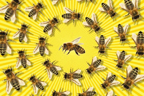 Why the honey bee 'apocalypse' is based on a lie
