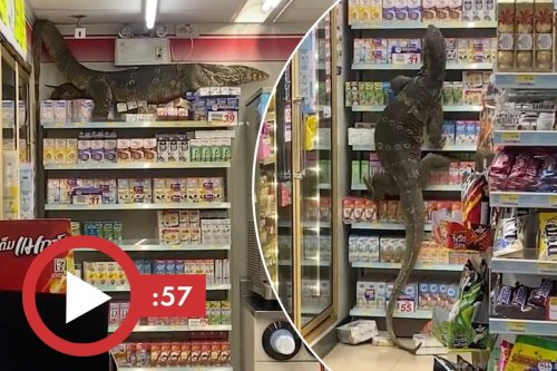 Giant lizard goes on supermarket sweep, wild video goes viral