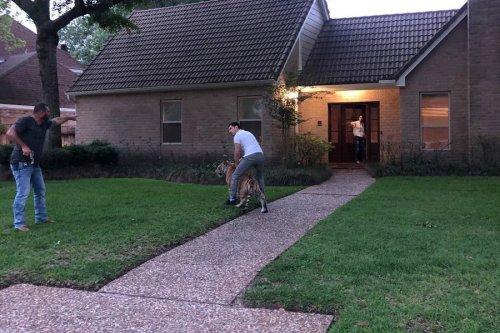 Tiger roaming Houston street leads to tense confrontation