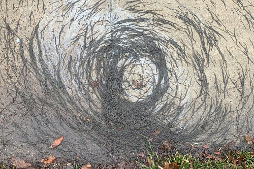 Gruesome 'worm tornadoes' horrify Hoboken residents