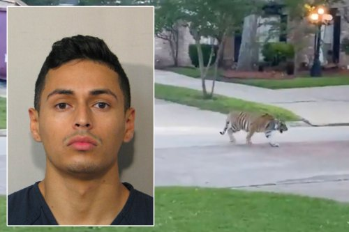 Houston man who allegedly had Bengal tiger is in custody