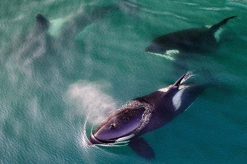 Killer whales attack fishing boat off Spain