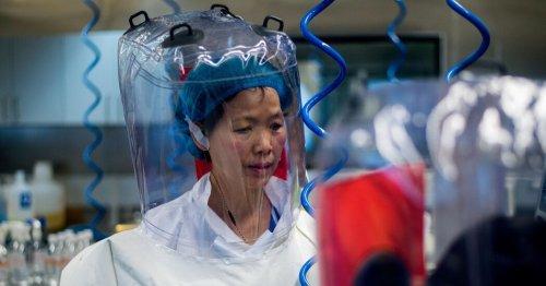 Shi Zhengli, Chinese Virologist, Faces Scrutiny Over Wuhan Lab Research