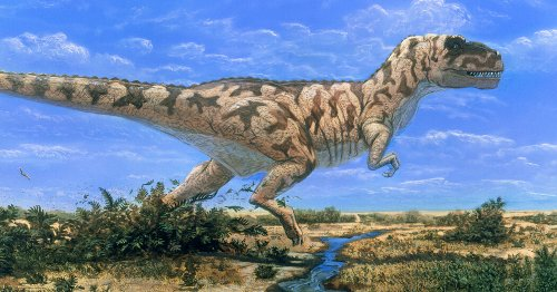How Many Tyrannosaurus Rexes Ever Lived on Earth? Here's a New Clue.