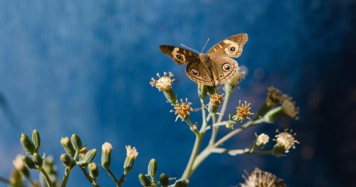 For the Butterflies — and the Rest of Us