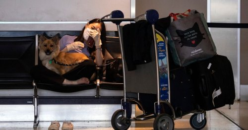 Flying With Your Pet? It Just Got a Lot More Difficult.