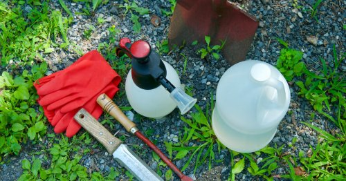 Tips on Weed Control and Herbicides