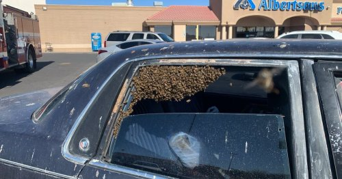 A Man Found 15,000 Bees in His Car After Grocery Shopping