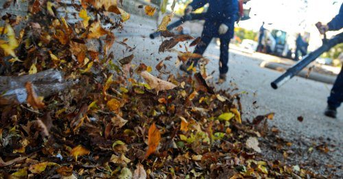 Leaf Blowers Destroy the Environment
