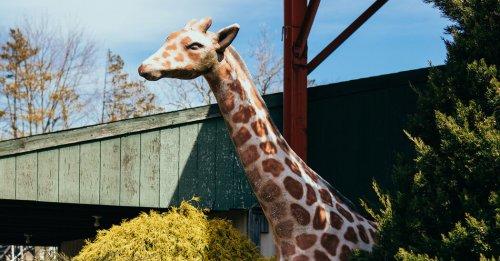 Clementon Park and Splash World Auction Has Surprise Ending