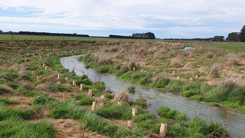Thousands of native plants improve Burgess Stream - NZ Herald