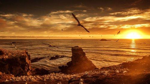 GO NZ: Top tips for a West Auckland winter weekend - NZ Herald