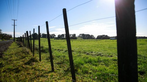 New Zealand Rural Land Company buys six South Island dairy farms for $61.4 million - NZ Herald